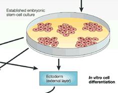 Eggceller bades i sædceller i en petrieskål (bilde fra withfriendship.com)