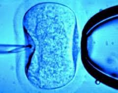 Mikroinjeksjon (bilde fra www.myhealthyway.com.au)